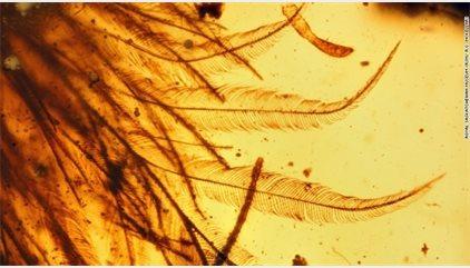 Aparecen restos de una cola de dinosaurio conservados en ámbar