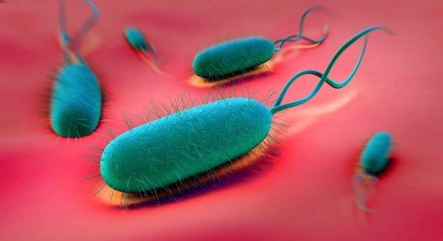 'Helicobacter Pylori'