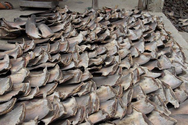 Pesca ilegal