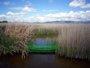 Foto: Las Tablas de Daimiel tienen turbidez en sus aguas, con presencia de peces invasores