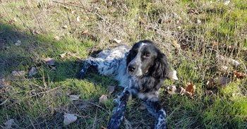 Muere un perro que vivía en un refugio a causa de los petardos de...