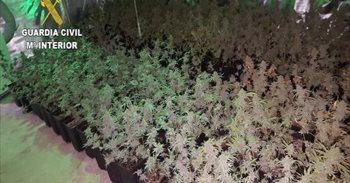 Detenidas 22 personas por cultivar marihuana en Antequera para después...