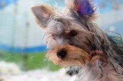 Cinesa se une a la Asociación Perrotón y emite desde hoy un 'spot' contra el abandono de perros