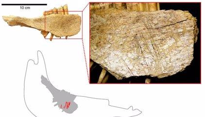 Los primeros humanos llegaron a América 10.000 años antes