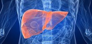 Esta proteína protege del hígado graso (GETTY/SEBASTIAN KAULITZKI)