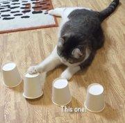 Internet considera a este gato un verdadero genio (INSTAGRAM/CURLYSNOW0915)