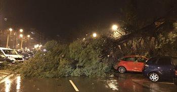 Riesgo de desbordamientos y caída de árboles en Alicante por el temporal