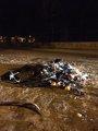 Foto: Identificados seis menores por el incendio de un contenedor en Lora del Río