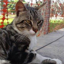 Gato de la Puerta Dos