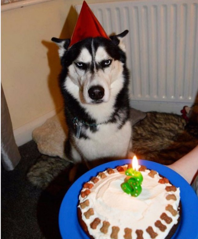 Perro cumpleaños