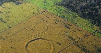Cientos de misteriosos geoglifos aparecen en la Amazonia deforestada