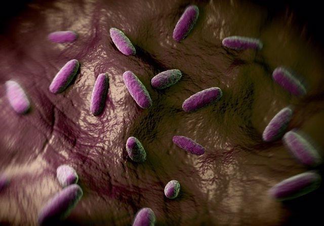 Salmonella typhimurium, bacterias