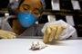 Foto: Crean ratones que resisten la tentación de la cocaína