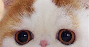 Día Internacional del Gato: 40 curiosidades de los gatos que,...