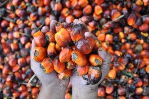 La OCU sugiere no abusar del aceite de palma y consumir solo el de cultivos sostenibles (OCU)