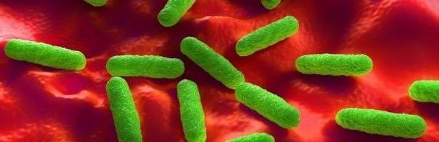 Bacterias resistentes a antibióticos