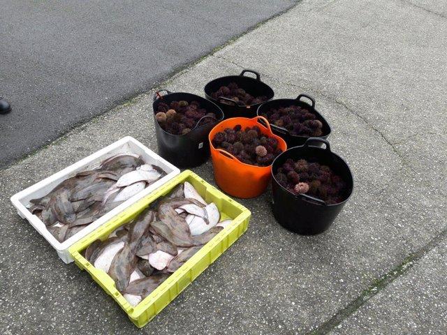 La Guardia Civil de Lugo interviene pescado irregular.