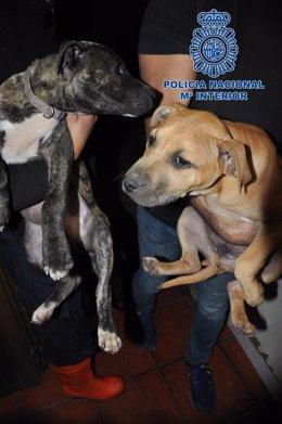 Perros requisados por la Policía