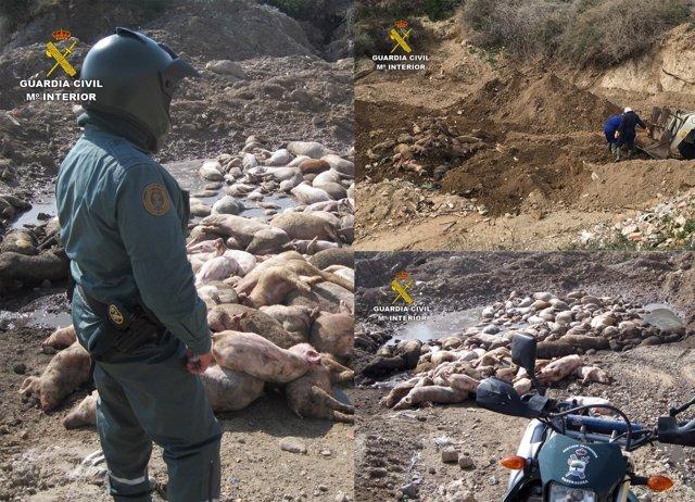 Imagen de los cadáveres expuestos a la intemperie, durante la investigación