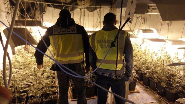 Un agente de la Policía Nacional junto a un guardiacivil en un cultivo indoor