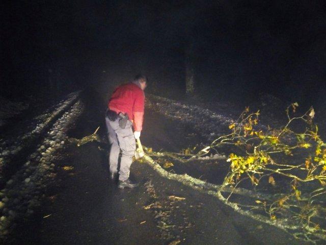Rama caída en la carretera por el viento