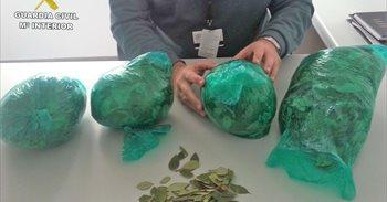 Intervenidos 1,6 kilos de hoja de coca en el aeropuerto de Almería a una...