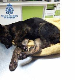 Cachorro rescatado en Vélez-Málaga