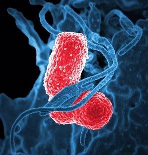"""La OMS hace un llamamiento """"urgente"""" para el desarrollo de nuevos antibióticos contra las bacterias multirresistentes (PIXABAY)"""