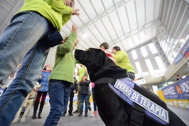 Taller Asistido Con Perros