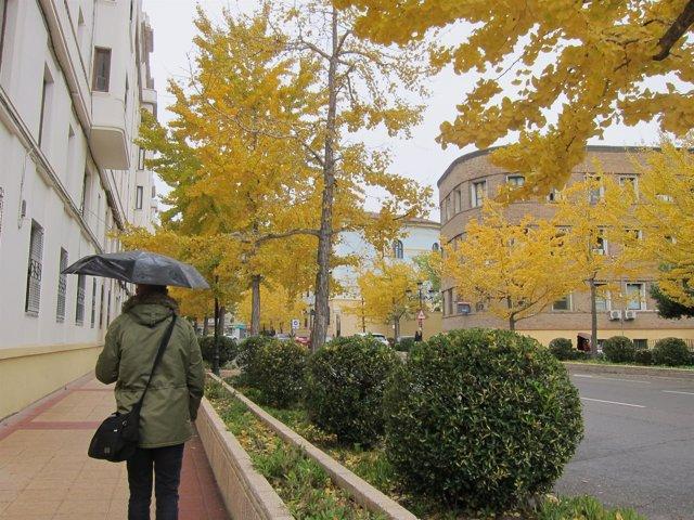 Lluvia en Zaragoza, otoño, paraguas, peatón, pasear