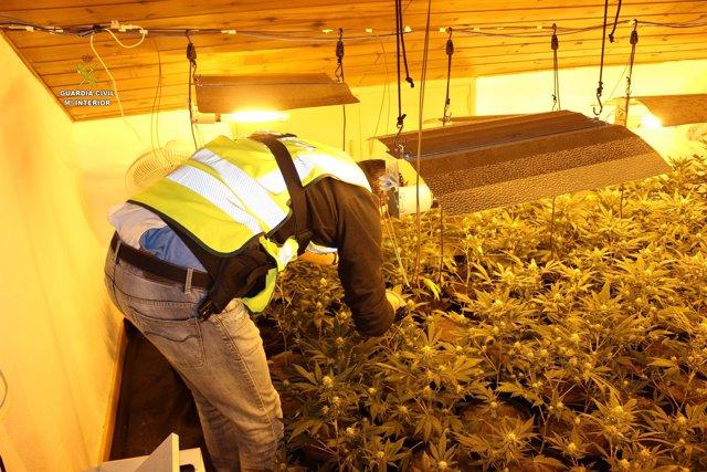 Descubren dos plantaciones de marihuana en Reus y Miami Platja