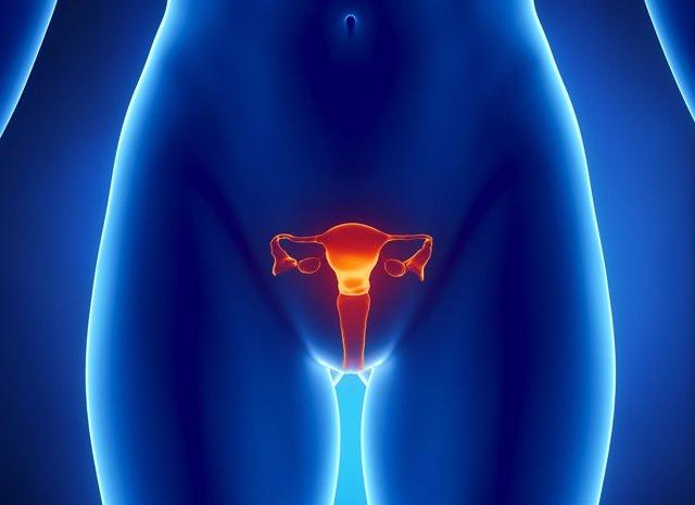 Utero, ovarios