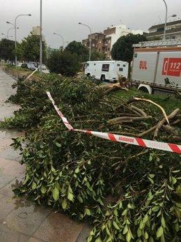 El temporal causa incidencias en Morón.