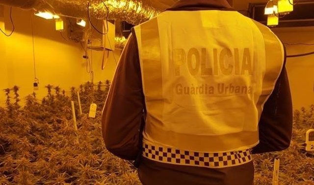 La Guardia Urbana interviene 382 plantas de marihuana en Nou Barris