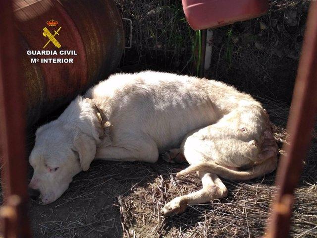 El perro que estaba dejando morir el detenido en Molvízar