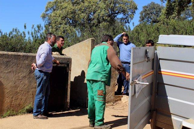 Entrega de reproductores autóctonos porcinos en Huerto Ramírez