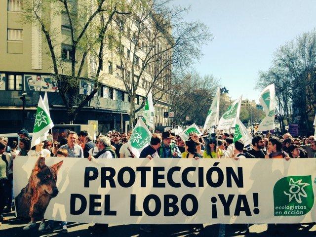 Manifestación en favor del lobo ibérico