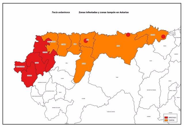 Dispersión de la polilla guatemalteca en Asturias