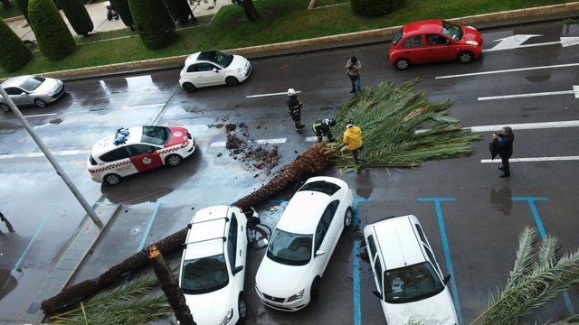 Imagen del árbol volcado por el viento en Cartagena