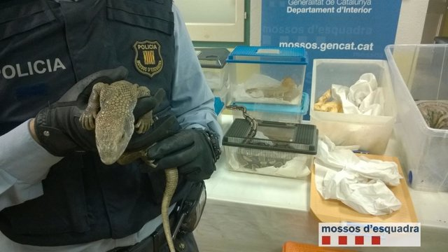 Reptiles hallados sin documentación en regla