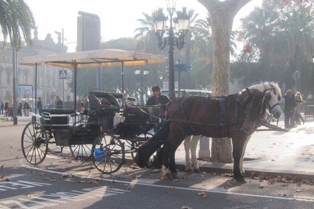 Carruaje de caballos en Barcelona