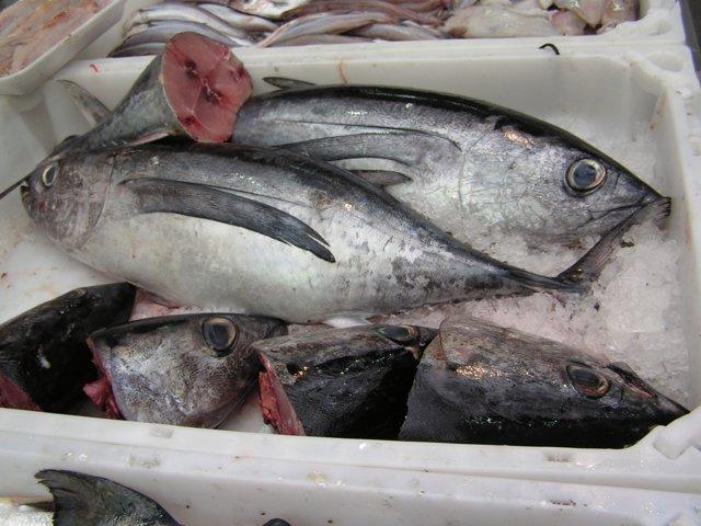 Captura de pescado.