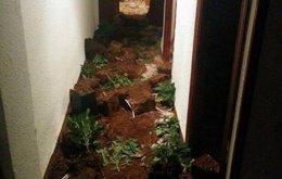 Uno de los pasillos de la vivienda con tierra y plantas