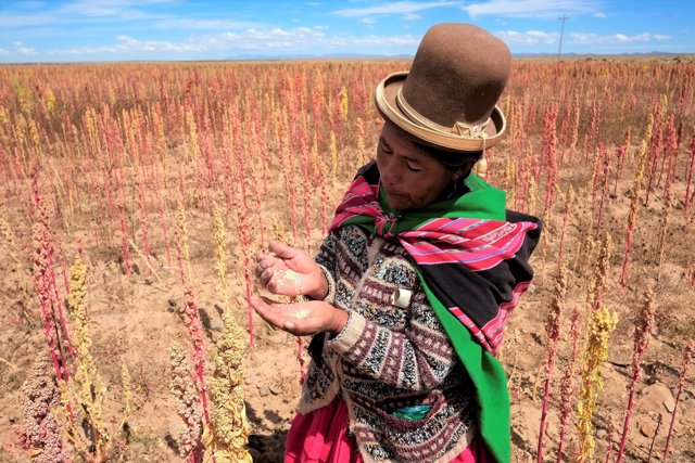 Una mujer boliviana enseña las semillas de quínoa