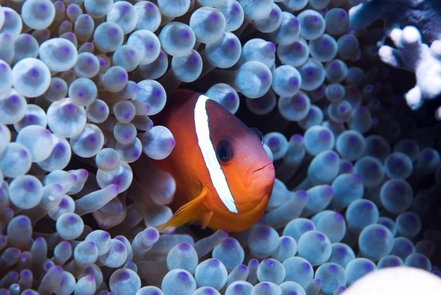 Película 'El océano secreto de Jean-Michel Cousteau'