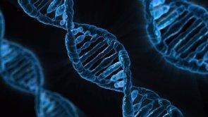 Descubren las primeras mutaciones en la vida humana (PIXABAY)