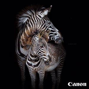 Canon y WWF España ponen en marcha un concurso online solidario para dar visibilidad a la Hora del Planeta