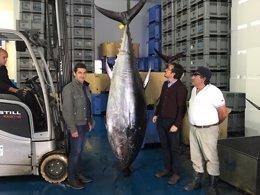 Ejemplar de atún rojo
