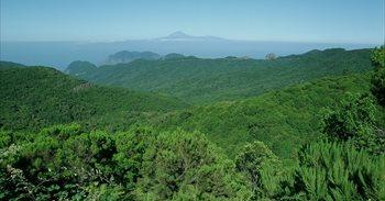 El Parque Nacional de Garajonay recibirá una inversión de 2,1 millones