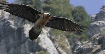 Exigen suspender la caza en el coto del Parque del Calar (Albacete) donde...